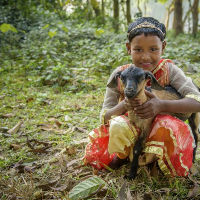 Child sponsorship and animals change lives in Bangladesh