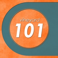 Vineyard 101: Our Approach to Doing Church