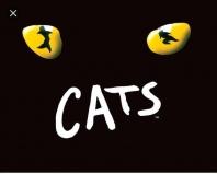 Sawdust & Cats