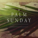 Palm Sunday Mea Culpa